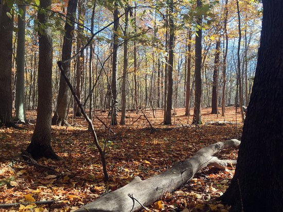 Greenville, OH: Autumn at Eidson Woods Preserve