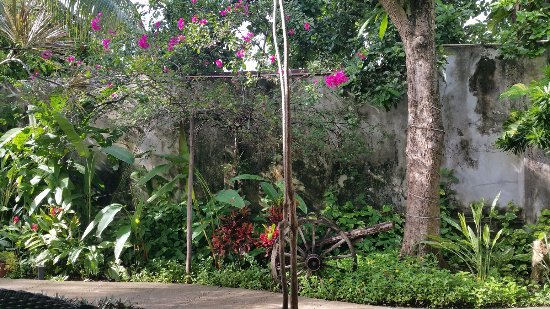 Villa Escondida Bed and Breakfast: Grounds - this place was an oasis!