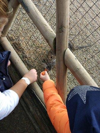 Wildpark Poing Bild