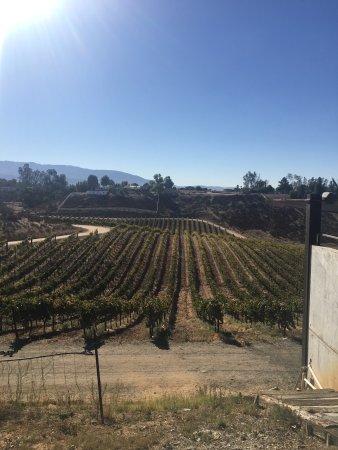 Go Grape Wine Tours Temecula