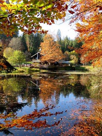 Grafenau, Alemania: Herbststimmung am Schwellhäusl