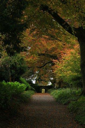 Tullow, Irlanda: Beech Walkway to entrance.
