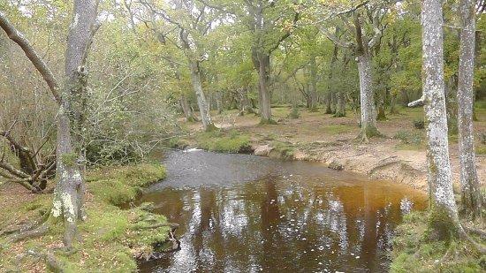 New Forest National Park Hampshire, UK: Halfway towards Brockenhurst