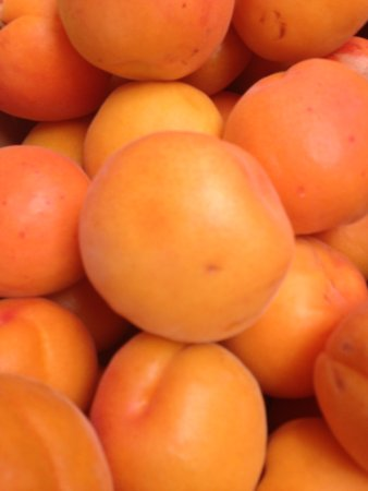 Johnson's Cottage Orchard & Fruit Stall: Just picked apricots
