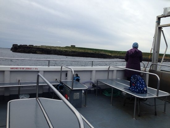 Seahouses, UK: Checking out the seals and the birds all around the boat.