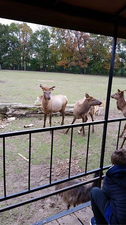Dutch Creek Farm Animal Park : photo2.jpg