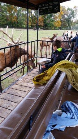 Dutch Creek Farm Animal Park : photo3.jpg