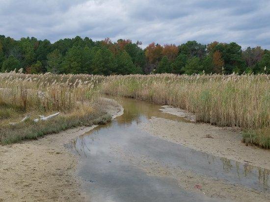 Flag Ponds Nature Park: 20171028_173547_large.jpg
