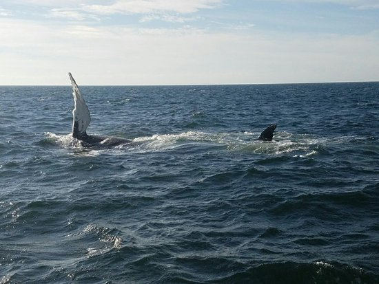 7 Seas Whale Watch Gloucester Ma Top Tips Before You