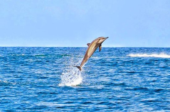 Swim with Wild Dolphins Including Breakfast & Hotel Pickup & Dropoff
