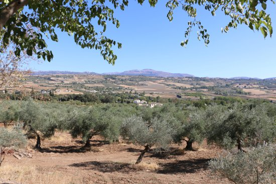 Hotel La Fuente De La Higuera: Surrounded by olive groves...