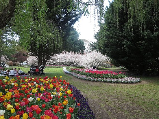 Sutton, Australia: Flowering trees and tulip beds