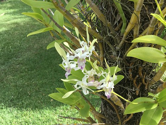 Port Moresby Nature Park張圖片