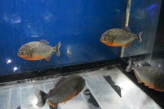 �������������������� picture of kasumigaura aquarium kasumigaura