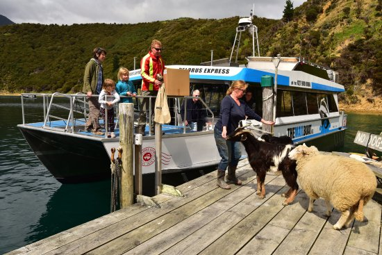 Pelorus Mail Boat: Delivering the mail at Wakatahuri