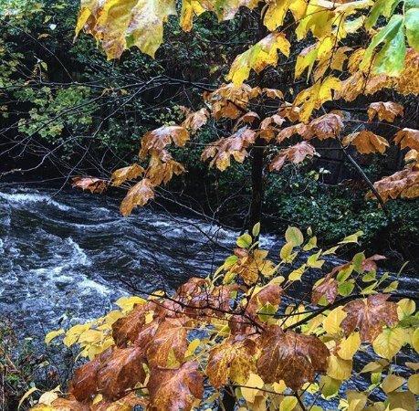 Burnaby, Kanada: photo0.jpg