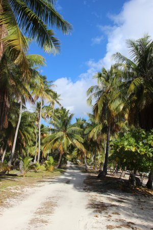 Tuherahera, French Polynesia: Piste longeant la plage