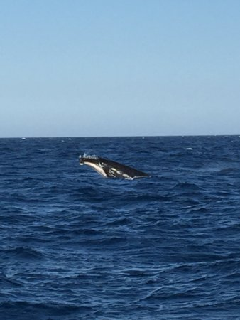 Whales in Paradise - Gold Coast Whale Watching Pty Ltd: photo0.jpg