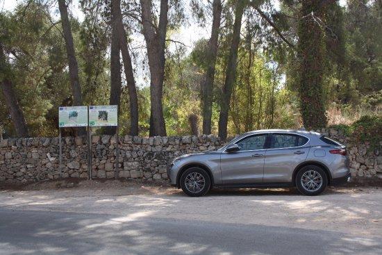 Serranova, Italie : olivi secolari nei presso del centro