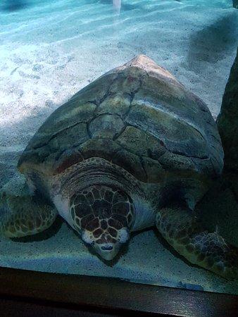 Aquarium de Biarritz: Tartaruga no aquário