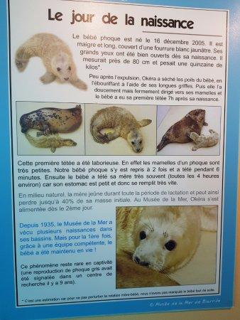 Aquarium de Biarritz: Nascimento da 1ª foca em cativeiro. Há um filme sobre o evento