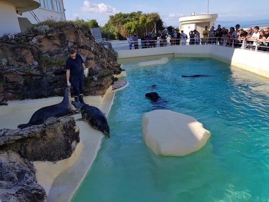 Aquarium de Biarritz: O treinador alimentando as focas