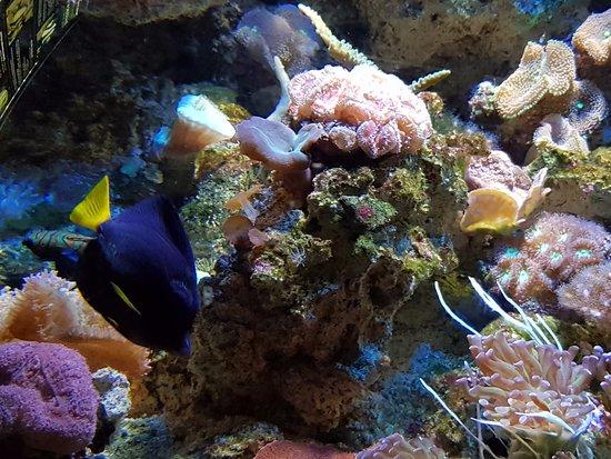 Aquarium de Biarritz: Peixe azul