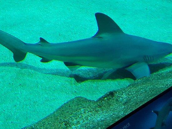 Aquarium de Biarritz: Tubarão