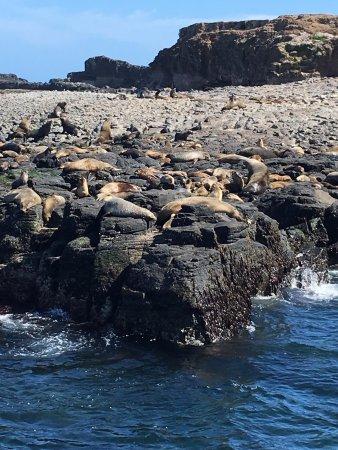 Phillip Island Wildlife Park: photo1.jpg
