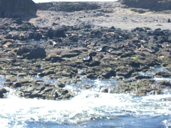 Phillip Island Wildlife Park: photo3.jpg