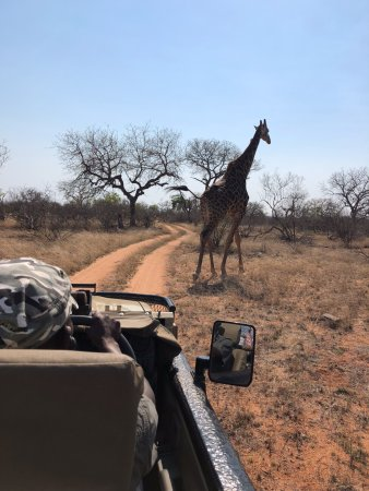 Balule Nature Reserve, South Africa: Game Drive
