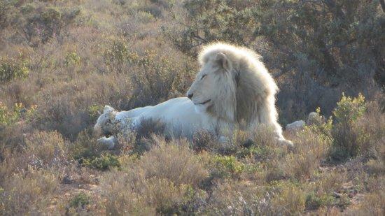 White Lion Lodge Image