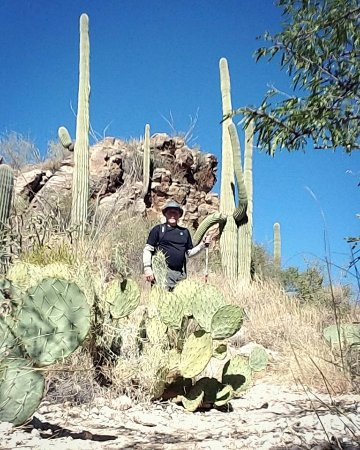 Sabino Canyon: HIrking the phone line trail amidst the saguaro cacti .. bring plenty of water and sunscreen!