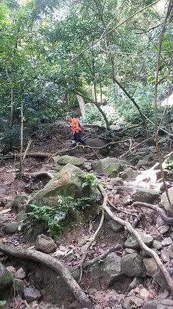 Negeri Sembilan, Malaysia: akar pohon yang besar ini cukup membantu