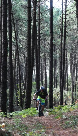 Cycling Rentals & Tours: Some track in the park