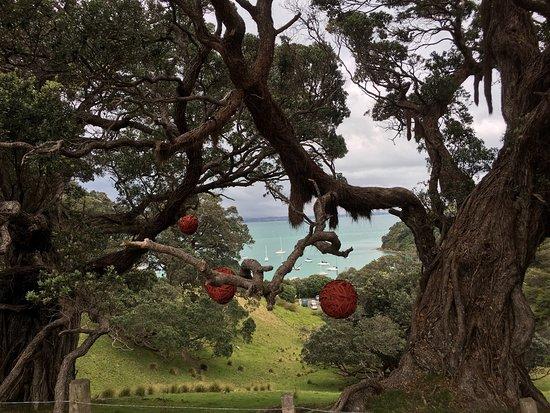 Waiheke Island, Neuseeland: photo1.jpg