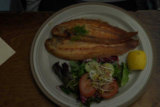 De Krokodil: good fish