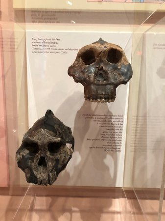 Yale Peabody Museum of Natural History : Evolution exhibit