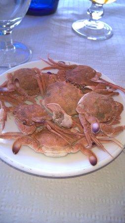 Pepe Oro Bar Restaurant: tiny crabs