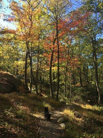 Bear Mountain, NY: Foliage