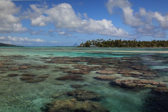 Vahine Island, Polinesia Francesa: Lagoon from the bench on the outer reef