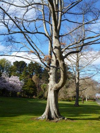 Invercargill, Nya Zeeland: Tree