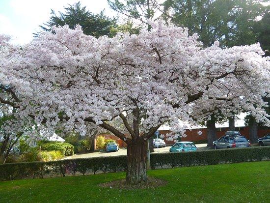 Invercargill, Nueva Zelanda: Wonderful Blossoms