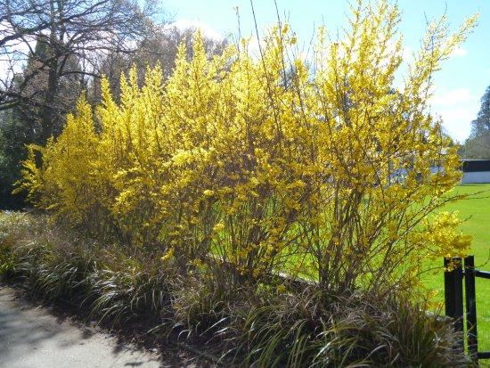 Invercargill, Nueva Zelanda: Pretty flowers