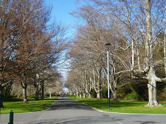 Invercargill, Nueva Zelanda: Coronation Avenue