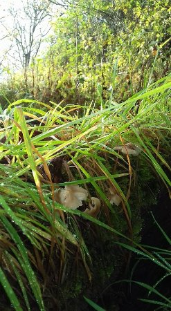 Gullane Beach: Fungus in the woods