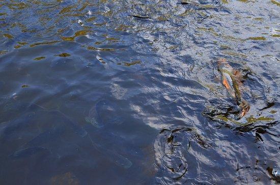 Laguna el tabacal la vega lo que se debe saber antes for Como hacer una laguna artificial para peces