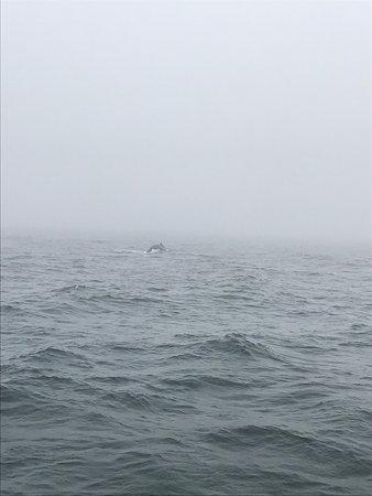 New England Aquarium Whale Watch: photo1.jpg