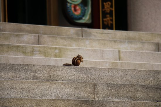 squirrel of Guinsa Temple - Picture of Guinsa Temple