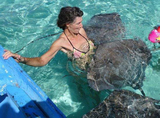 Tapu Lodge; Ausflug zu den Mantas und Haien